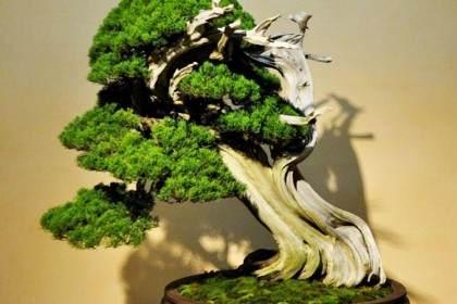 木村正彦在大宫盆景艺术博物馆