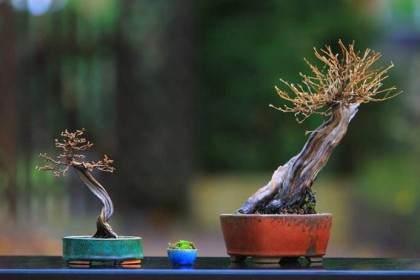 两个蕨麻盆景和两个全新的书籍