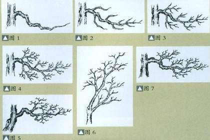 也谈杂木盆景的枝托造型布局与线条美