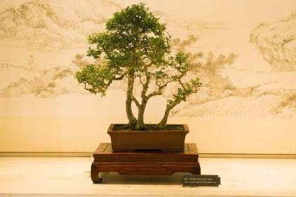 中国盆景艺术大师石景涛来我公司参观指导