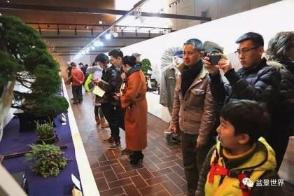 2018国风盆栽展《日本最为顶级的盆景展览》