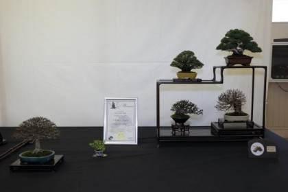 2015年小品盆景英国展会