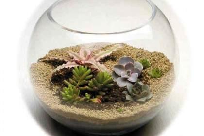 多肉植物:微型盆景打造时尚家居新元素