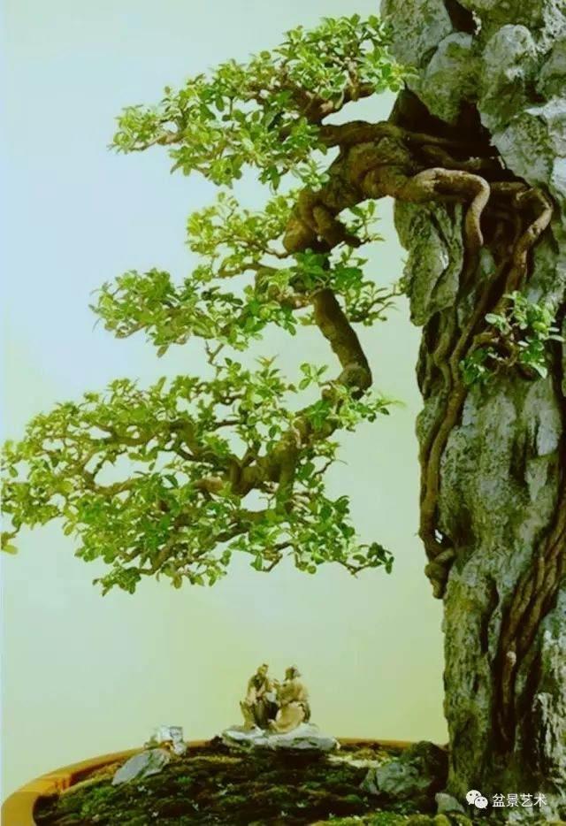 中国盆景艺术鉴赏的过程
