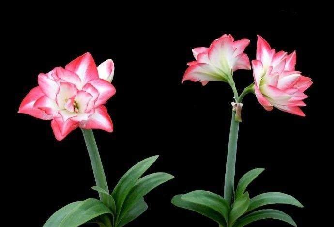 掌握4个小秘笈 让室内盆栽植物快乐过