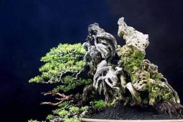 鬼斧神工赏盆景之十三:附石式盆景