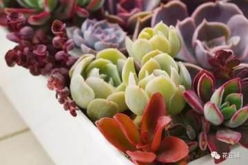 光照和温度会使多肉植物变色 图片