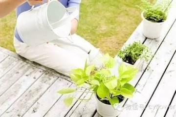 盆栽花卉的浇水方法 图片