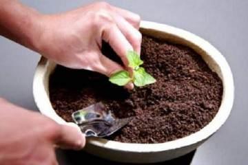 盆栽花卉的土壤配制过程 图片