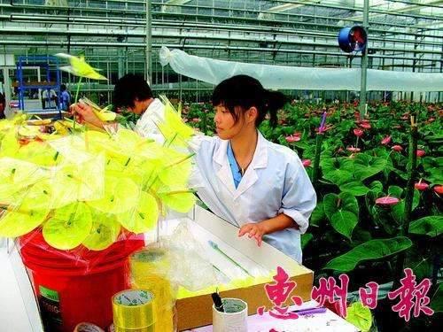 2003年 皇基公司是全球最大的蝴蝶兰切花供应商之一