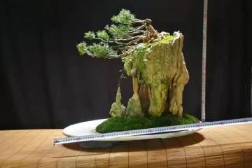 首届杭州盆景赏石艺术博览会开幕式全景呈现