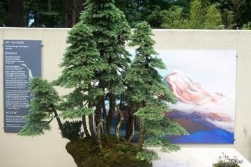 美国西雅图的太平洋盆景博物馆