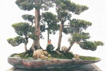 2018年 临沂秋季盆景展在花木博览城隆重开幕