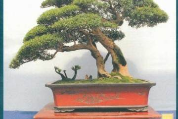2018年 第六届中国沭阳花木盆景节