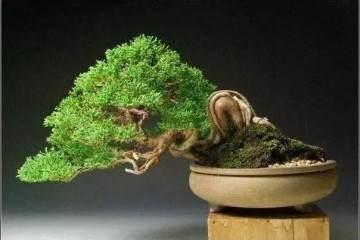 如何自己DIY喜欢的微型盆景呢 图片