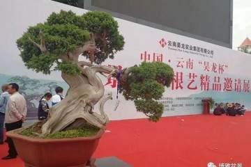 """中国云南""""昊龙杯""""盆景精品邀请展"""