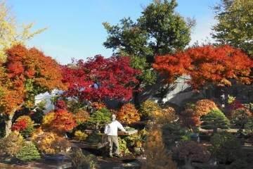 2018年 对大宫盆景村的秋季访问