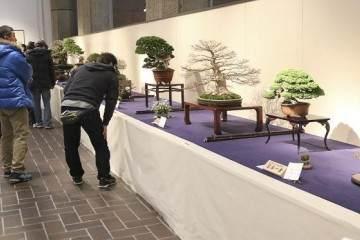 2018年 日本第92届国府盆景决赛展