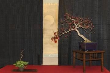 2017年第5届冬季剪影盆景盆景博览会