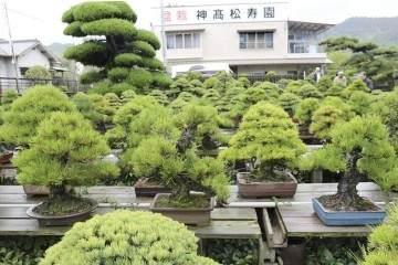 日本香川县最大的盆景园