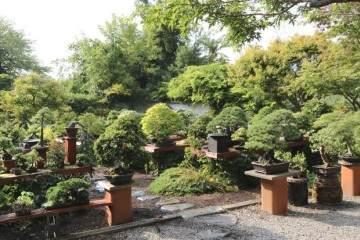 2015国际盆景植物园秋季开放日及销售