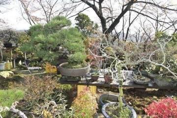 铃木诚一的儿子铃木利明继续使用盆景花园