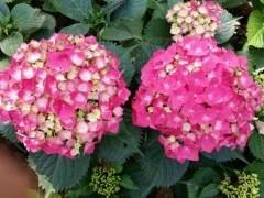 国际花展上 家庭园艺产品愈加丰富 尤其是资材产品