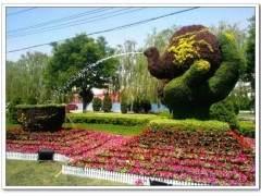 容器花园的种植设计模式提出 图片