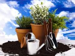 容器花园种植的设计模式 图片