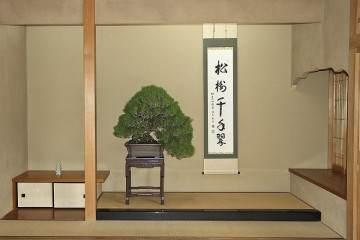 参观日本东京俊个先生的盆景博物馆