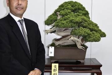 2014年 日本樱花盆景博览会