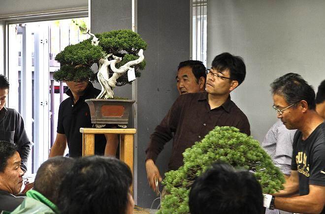 印度尼西亚举办的国际盆景双年展