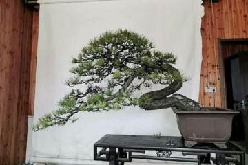 卜复鸣详解苏州园林与盆景艺术