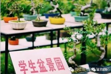 盆景制作走进广州校园!