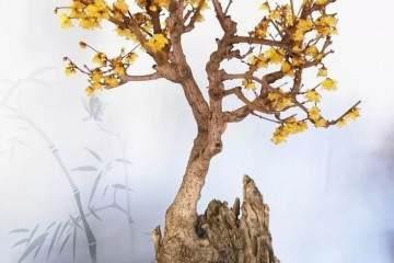 腊梅盆景的培育和繁殖方法有哪些?