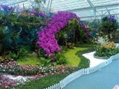 深圳市第九届中国花卉博览会 图片