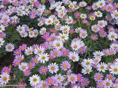 青州市花卉价格略有下降 销量同比上涨10%~15%