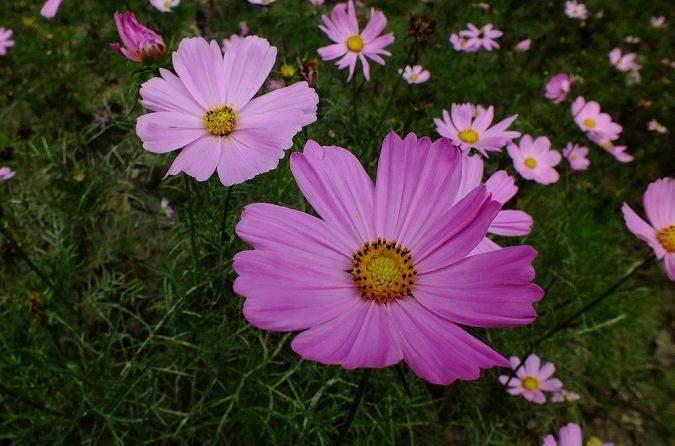 5月 青州花卉销售量上涨 整体好于去年