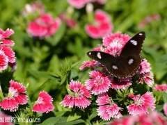 6月 青州花卉下跌10%~18% 进入销售淡季