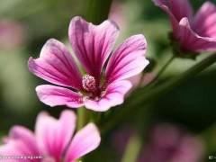 7月广州花卉市场整体表现为数量价格齐跌