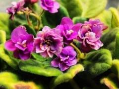 7月 青州受高温多雨花卉品质下降 需求减少