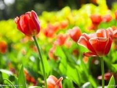 8月 上海各地盆花市场延续了7月的销售状况