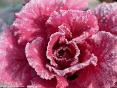 9月 青州花卉销售量 同比上涨10%~20%