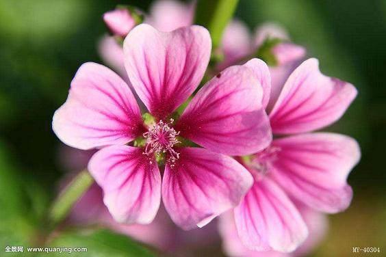 青州花卉销售整体上扬 盆花销售情况更不错