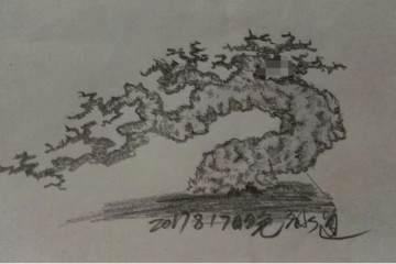 榕树盆景怎么改造设计的方法 图片