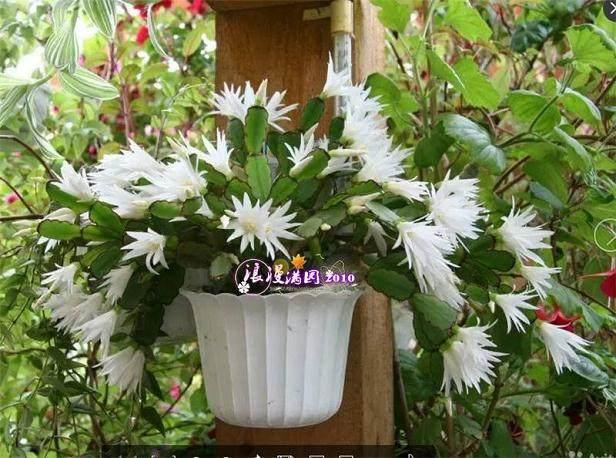 盆栽花卉的3个换土技巧