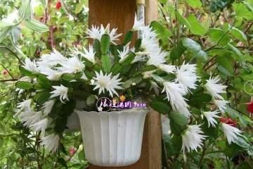 盆栽花卉的3个换土技巧 图片