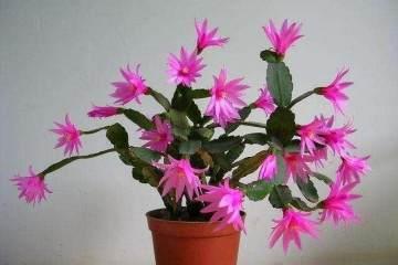 花卉盆栽的5个换土技巧 图片