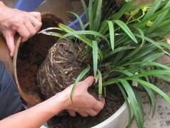 什么叫花卉的服盆、上盆、换盆、翻盆与转盆?