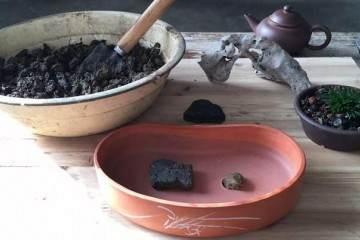 图解 菖蒲盆景怎么配石上盆的9个过程